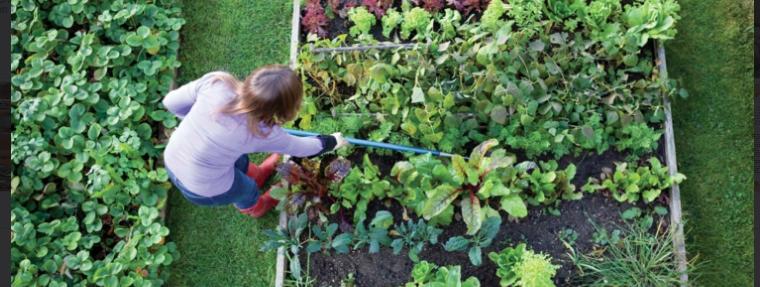 vegetable garden supplies moncton