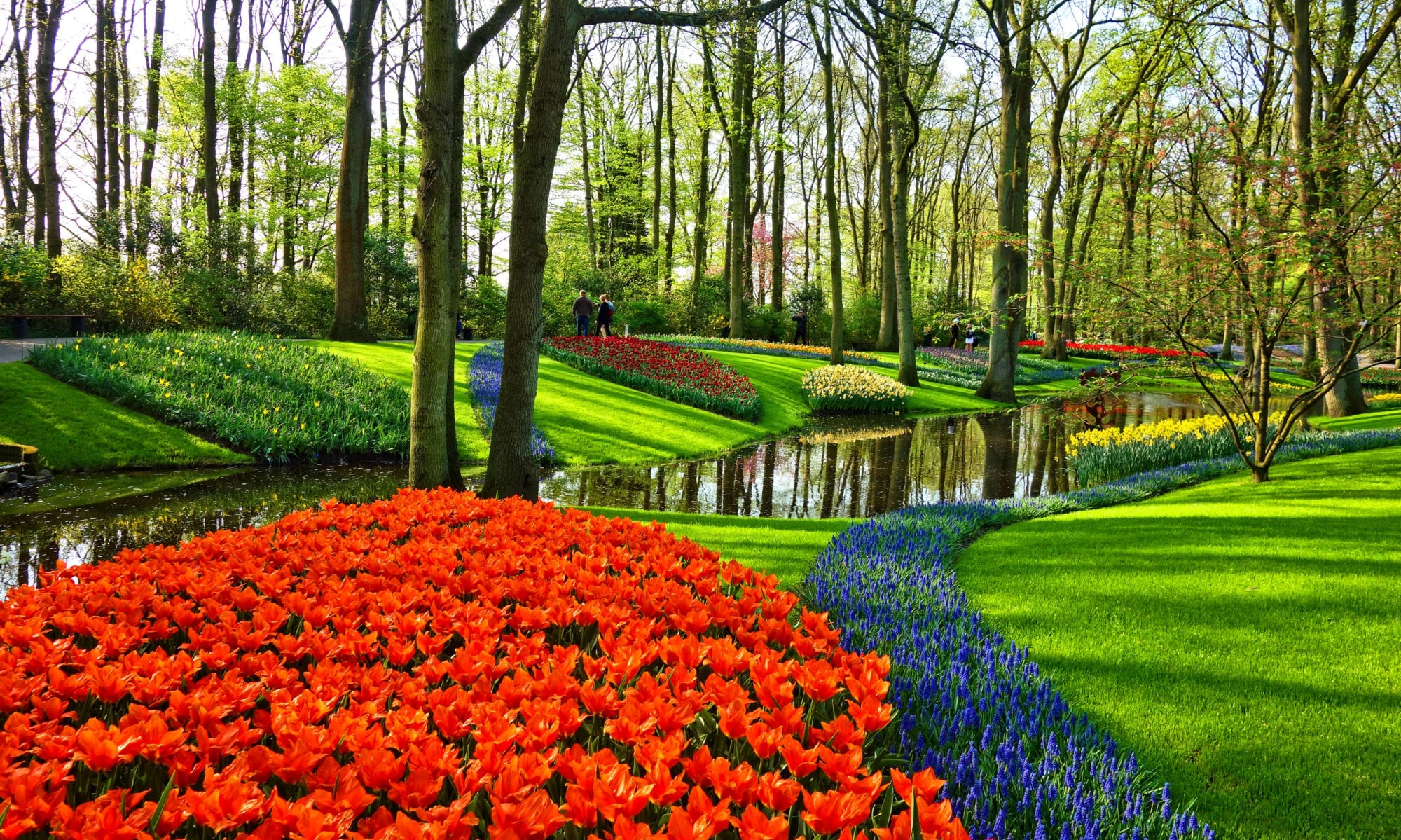 garden with colourful flowers